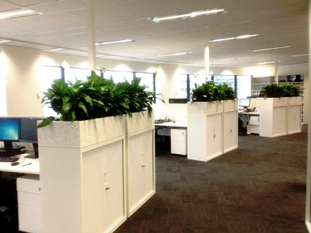 office planter. Spathiphyllums Displayed In White Cabinet Planter Boxes Office N