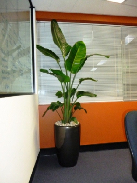 Floor Standing Planters Perfection Plant Hire