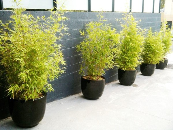 Outdoor Planters Perfection Plant Hire