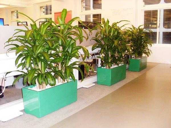 Planter boxes perfection plant hire for Cubicle planter box