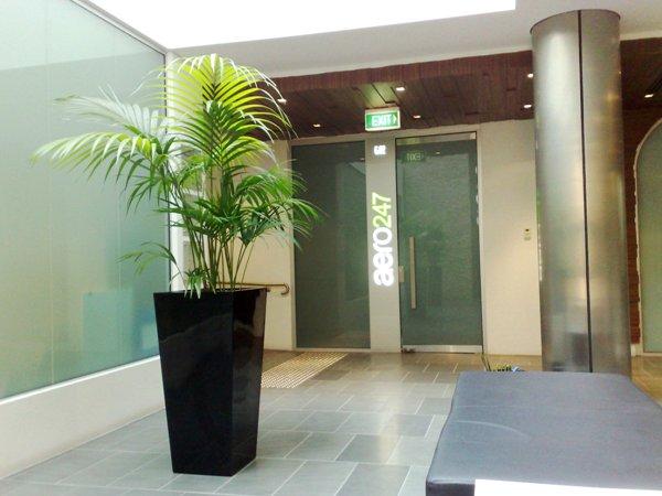 Foyer Plants : Foyer showroom planters perfection plant hire