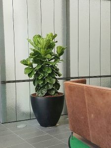 Foyer Planters