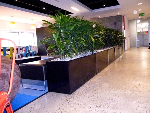Indoor Plants Hire for Offices & Businesses – Perfection