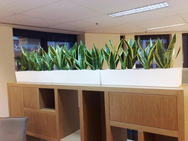 Planter Boxes Perfection Plant Hire