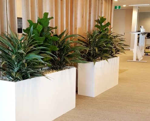 Tall Planter Boxes