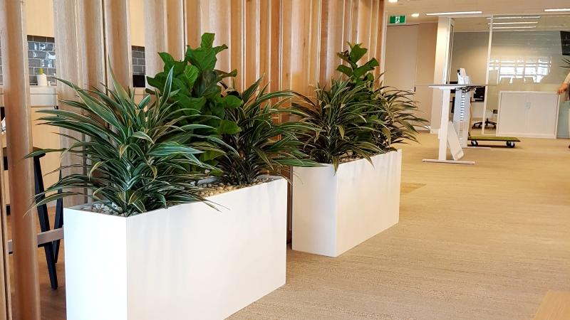 Tall White Planter Boxes Web