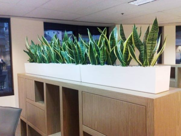 office planter boxes. stylish and modern this space is complete with sansevieria superba office planter boxes