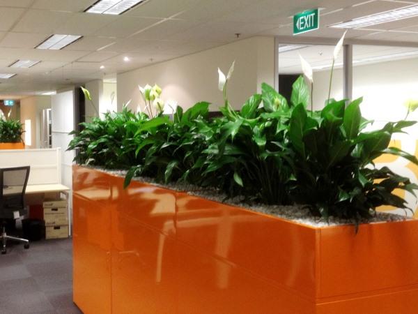 Cabinet Planter Boxes Perfection Plant Hire
