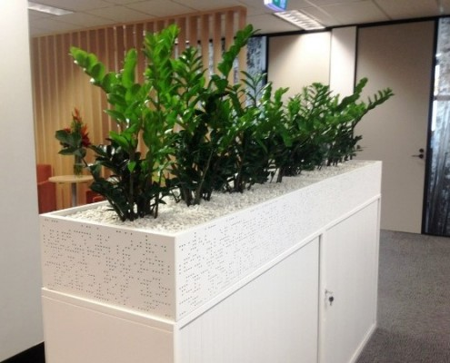 Zanzibar Gems displayed in White Cabinet Planters