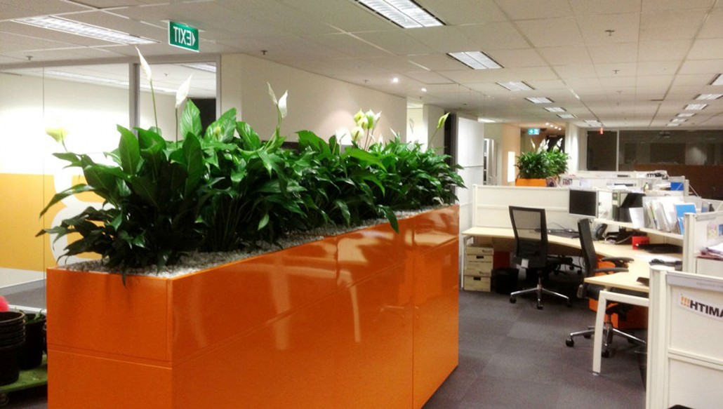 perfection plant hire we love supplying amazing plants stylish planters for offices or business across sydney