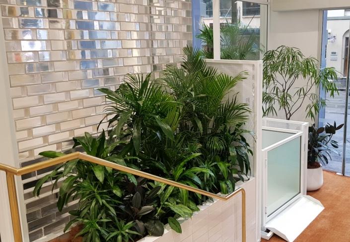 Foyer & Showroom Plants